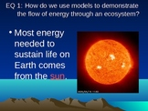 Flow of Energy Through the Ecosystems