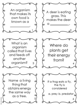 Flow of Energy FREEBIE: Food Chains, Producers, Consumers and More!