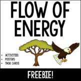 Flow of Energy FREEBIE: Food Chains, Producers, Consumers