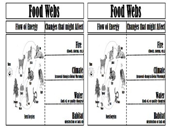 Flow of Energy and Changes that might Affect Food webs