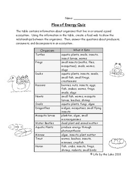 Flow of Energy in Pond Ecosystem Quiz
