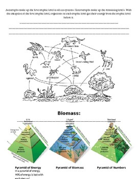 Flow of Energy in an Ecosystem Notes