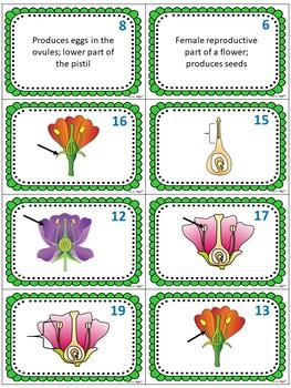 Flower Anatomy Card Sort