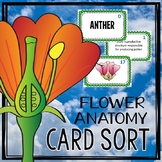 Flower Anatomy Card Sort