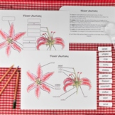 Flower Anatomy Pack: classroom poster, labeling activity,
