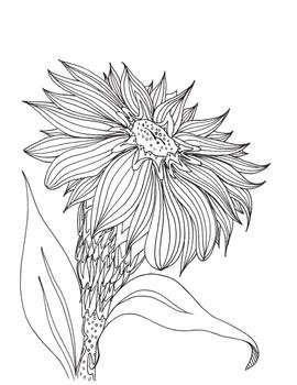 Flower Color Sheet