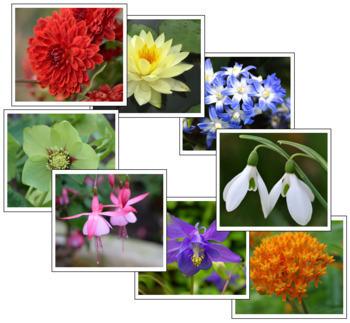 Flower Color Sorting Cards