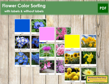 Classifying Flowers Worksheets & Teaching Resources   TpT