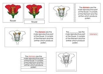 Flower Definition Set
