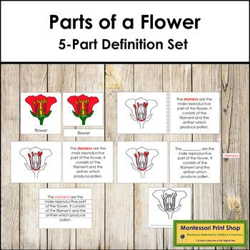 Flower Definition Set (Red)