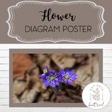 Flower Diagram Poster