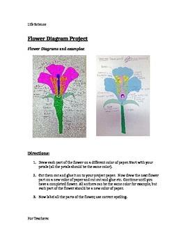 Flower Diagram Project
