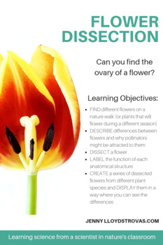 Flower Dissection - All About Flowers & How to Dissect Them