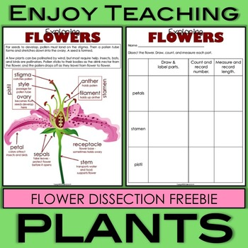 Flower Dissection Freebie