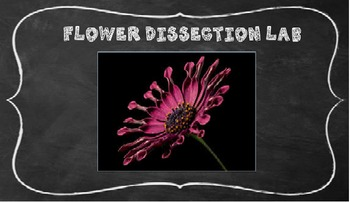 Flower Dissection Lab  - A Hands-on Science Activity!