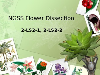 Flower Dissection PowerPoint
