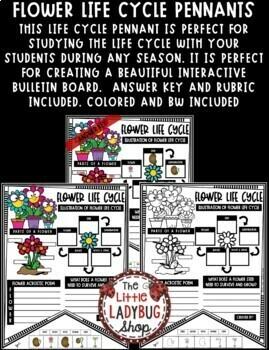 Flower Life Cycle Activity Science Spring Centers  • Teach- Go Pennants™