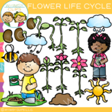 Plant Life Cycle Clip Art {Flower Life Cycle}