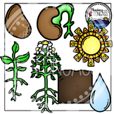 Flower Life Cycle Clipart