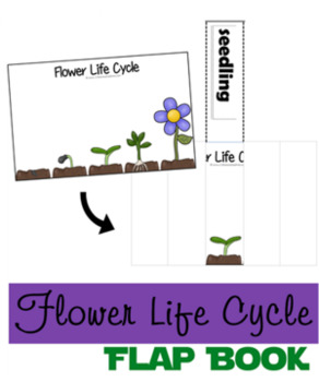 Flower Life Cycle & Flower Parts Flip Books