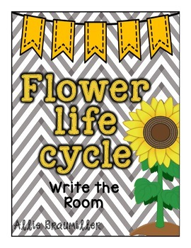 Flower Life Cycle: Write the Room