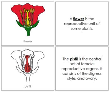 Flower Nomenclature Book (Red)