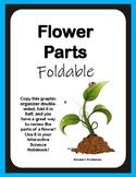 Flower Parts Foldable
