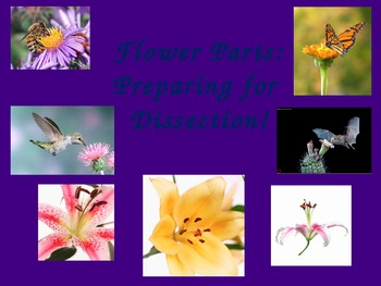 Flower Parts Powerpoint