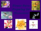 Flower Parts Powerpoint