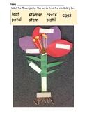 Flower Parts Quiz