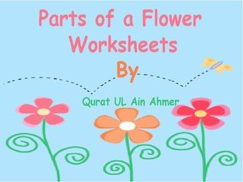 Flower: Parts of a Flower Worksheets: