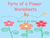 Flower: Parts of a Flower Worksheets: