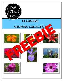 Flower Photo Collection Freebie!
