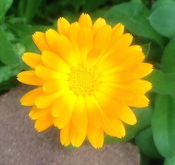 Flower Photograph Clip Art