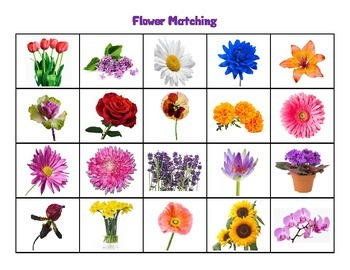 Flower Picture Match