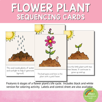 Flower Plant Life Cycle Sequencing Cards