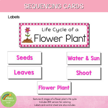 Flower Plant Life Cycle Sequencing Cards and Posters