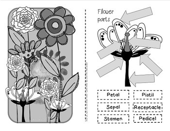 FLOWERS!  {Fun activities to support your learning about plant life cycles}