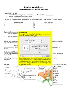 Flower Reproduction Student Choice Game Sheet (Easy Teacher Prep!)