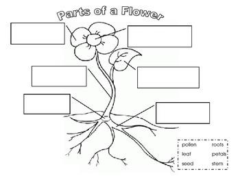 Flower Science Pack