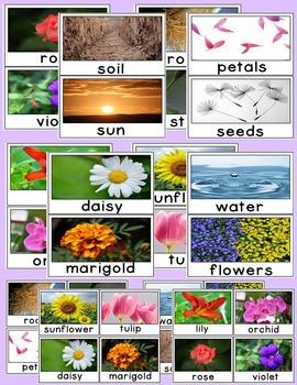 Plants Kindergarten Unit