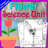 Plants Kindergarten Unit