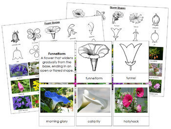 Flower Shapes: Cards and Control Charts