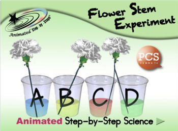 Flower Stem Experiment - Animated Step-by-Step Science - PCS