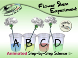Flower Stem Experiment - Animated Step-by-Step Science  - Regular