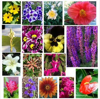 Bundle of Flower Stock Photos - Flower Picture Pack - Group of 19