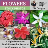 Bundle of Flower Stock Photos - Flower Picture Pack - Group of 9