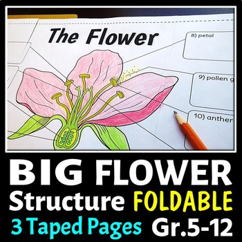 Flower Structure - Big Foldable for Interactive Notebooks or Binders