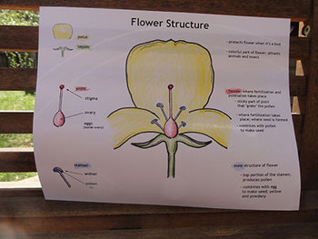 Flower Structure Pop-Up Notes (Plant Reproduction)