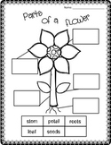 Flower Unit Life Cycle, Math and Literacy Activities